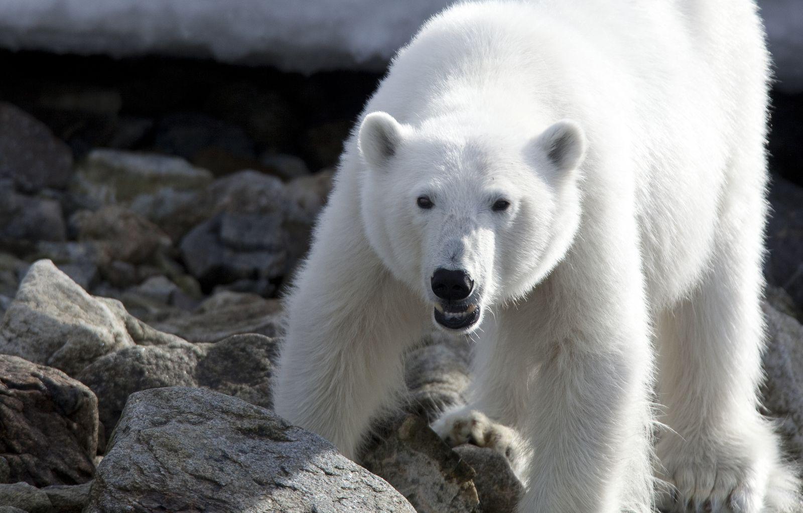 NORVEGIA: Spitsbergen. Nel regno dell'Orso Polare