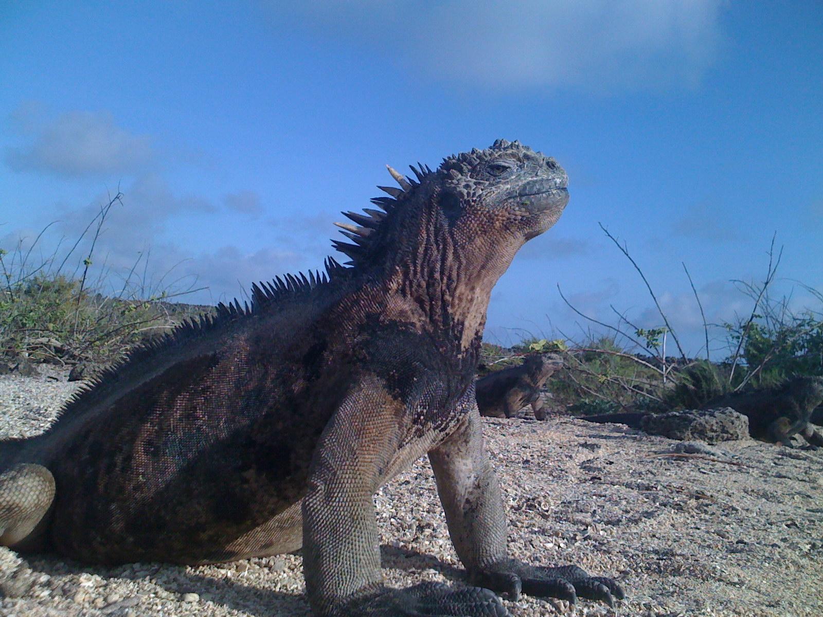 Galapagos: Las Islas Encantadas: itinerari di 5 – 6 – 8 giorni