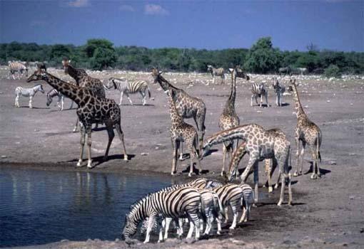 Namibia: Avventura in Namibia – sistemazione in campi tendati