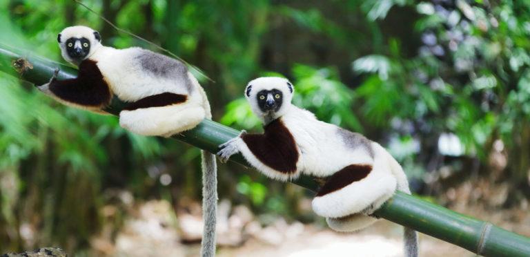 Madagascar: il Nord