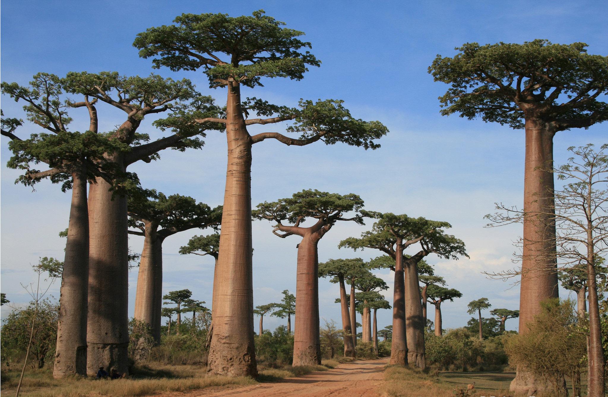 Madagascar: il Sud